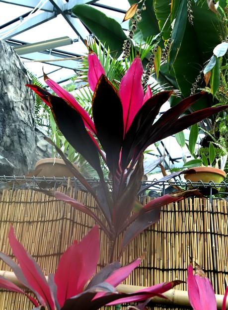 温室の植物4