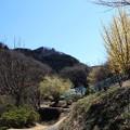 古寺 花の里への道