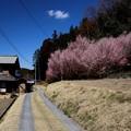 小川町 桃の花咲く道