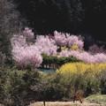 花の里 古寺花園
