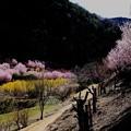 古寺 花園風景