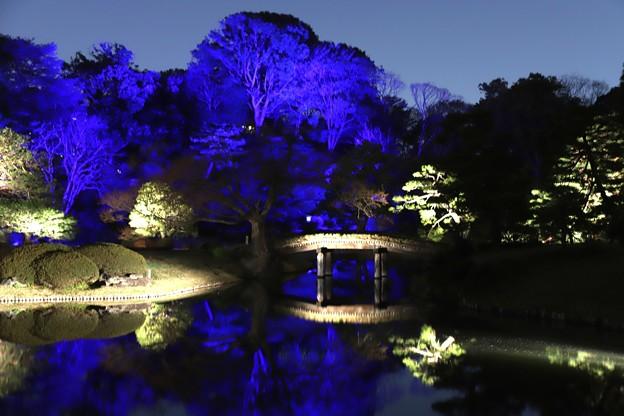 ブルーの色彩の六義園庭園