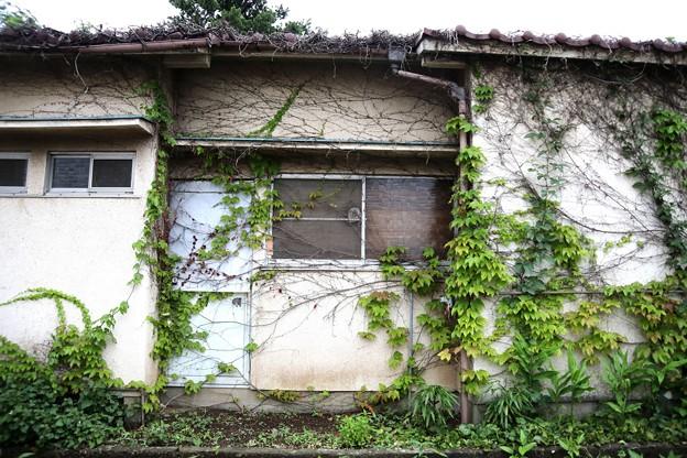 蔦のある家