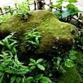 Photos: 苔石