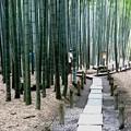 Photos: 報国寺竹庭園風景3