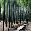 Photos: 竹の庭園1