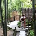 Photos: 報国寺竹庭園風景5