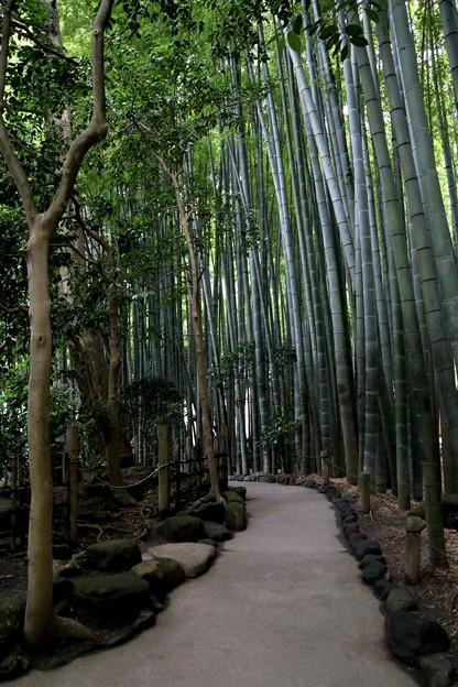 Photos: 報国寺竹庭園風景6
