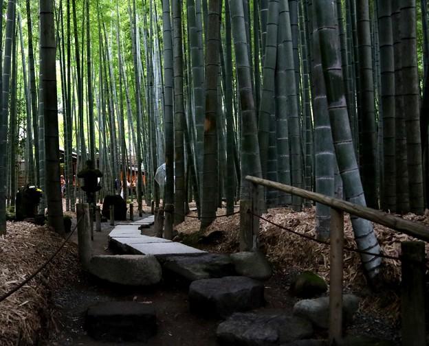 報国寺の竹庭園