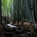 Photos: 報国寺の竹庭園
