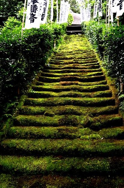 苔の石段(杉本寺)
