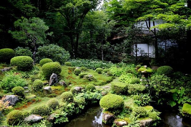 三千院 庭園2