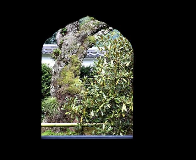 窓からの庭風景