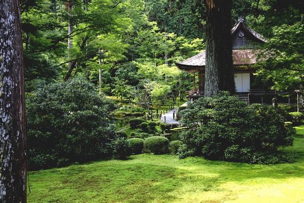 三千院 苔の庭園4
