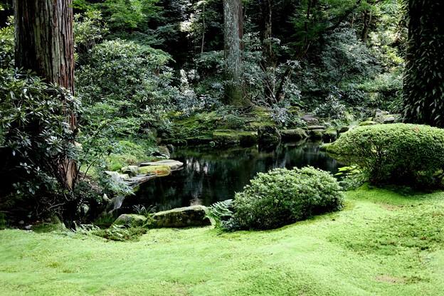 三千院 苔の庭園5