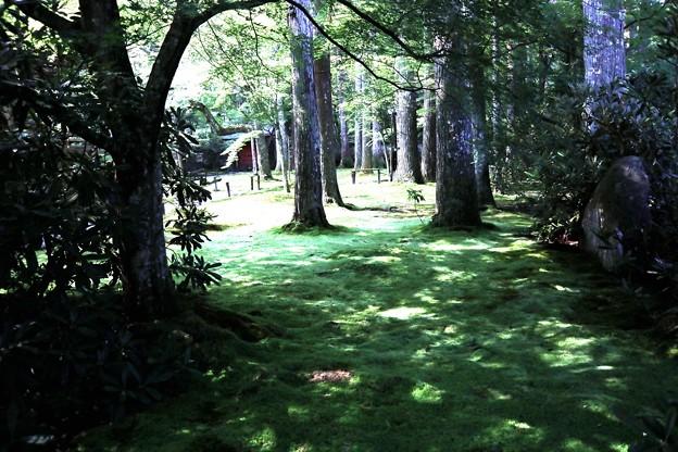三千院 苔の庭園8