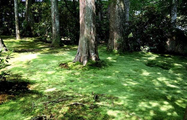 Photos: 三千院 苔の庭園12
