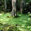 三千院 苔の庭園12