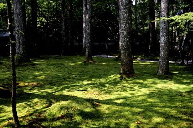 三千院 苔の庭園15