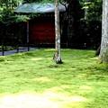Photos: 三千院 苔の庭園16