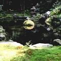 Photos: 三千院の池の庭園