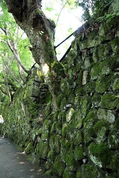 石垣の中の樹木