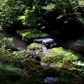 Photos: 実相院の池の庭園1