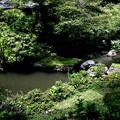 Photos: 実相院の池の庭園2