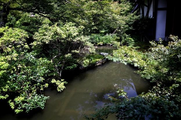 実相院の池の庭園3