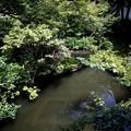Photos: 実相院の池の庭園3
