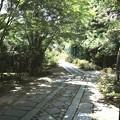 Photos: 門より寺院への道