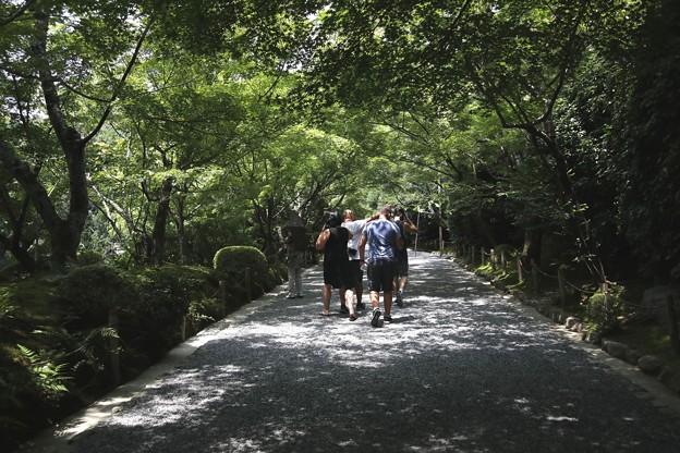 龍安寺の参道