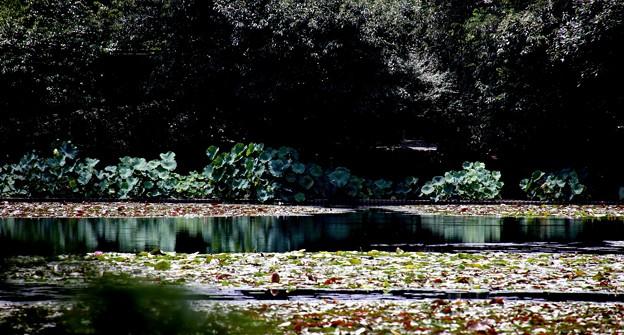 龍安寺 鏡容池1