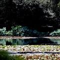 Photos: 龍安寺 鏡容池1