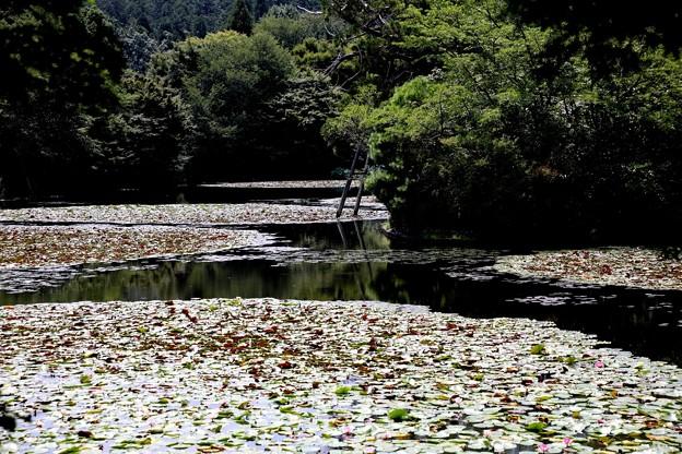 龍安寺 鏡容池2