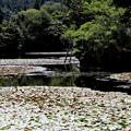 Photos: 龍安寺 鏡容池2