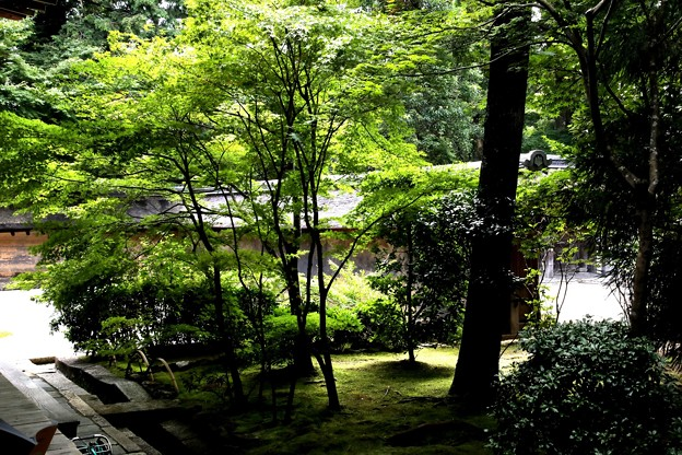 Photos: 龍安寺の庭園3