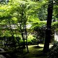 龍安寺の庭園3