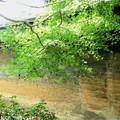 Photos: 龍安寺の壁 趣がある。