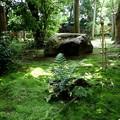 龍安寺の苔の庭園2