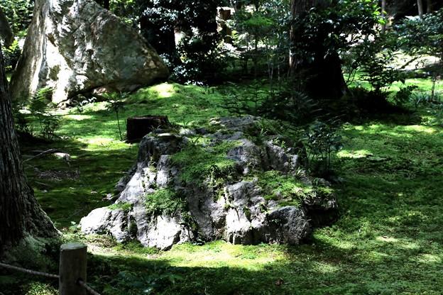 龍安寺の苔の庭園3
