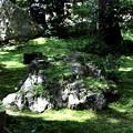 Photos: 龍安寺の苔の庭園3