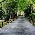 Photos: 龍安寺 鏡容池の散策