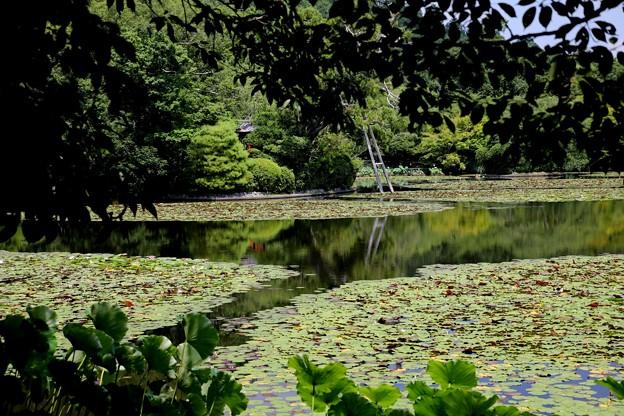 龍安寺 鏡容池3