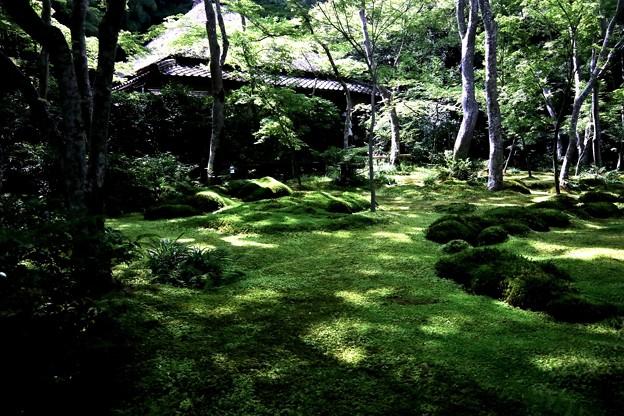 祇王寺苔の庭園2