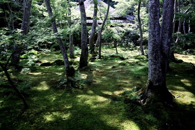 祇王寺苔の庭園5