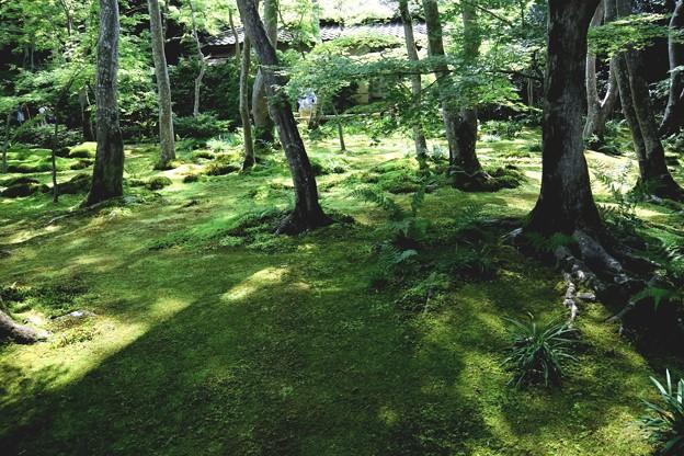 祇王寺苔の庭園6