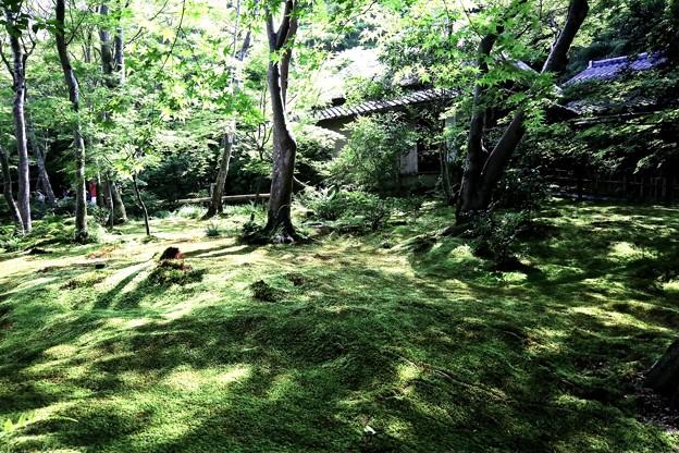 祇王寺苔の庭園8