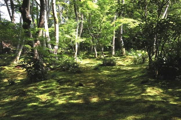 祇王寺苔の庭園10