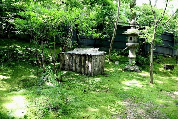 祇王寺苔の庭園12